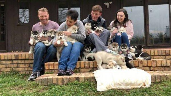 Filhotes de husky siberiano, como são lindinhos estes animais!!!
