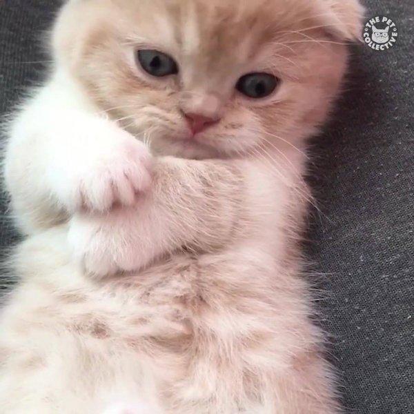 Filhotinhos da gatinhos, duvido você não se apaixonar por estes olhinhos!!!