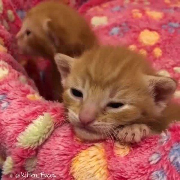 Filhotinhos de gatinhos amarelinhos, olha só estas carinhas lindas!!!