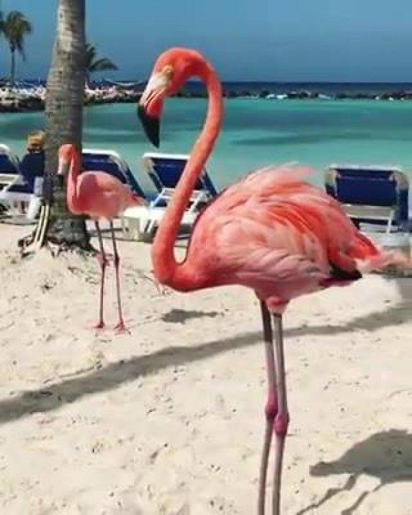 Flamingos na praia, para você admirar esses animais um pouquinho!