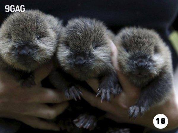 Fotos de filhotinhos de vários animais, é um mais lindinho que o outro!!!