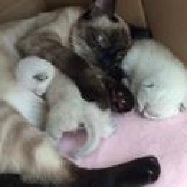 Gata cuidando de seus filhotinhos, olha só que coisa mais linda!!!