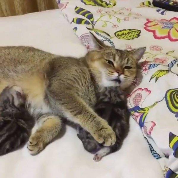 Gatinha com seu filhotinhos, olha só o amor desta mamãe com seus filhotinhos!!!