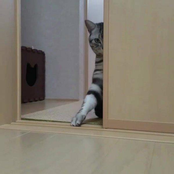 Gatinho brincando com dono, olha só esta patinha, os gatos são demais!!!