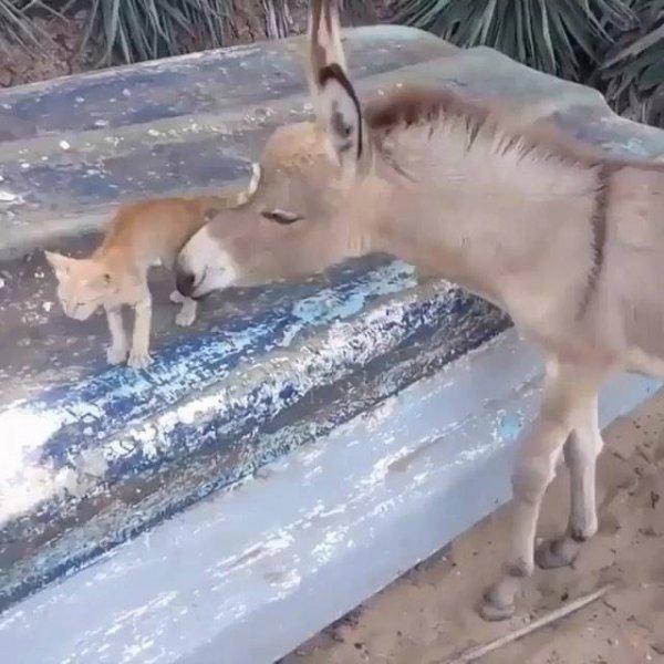 Gatinho e burrinho uma amizade muito fofa, olha só que amor!!!