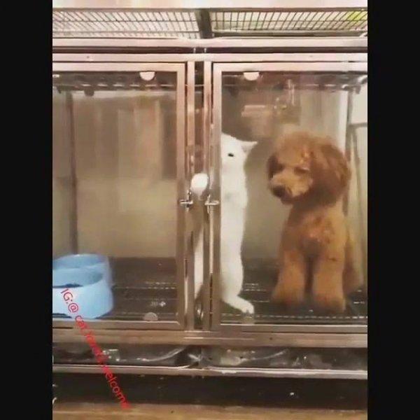 Gatinho especialista em fugir da gaiola, olha só a rapidez que ele abre!!!