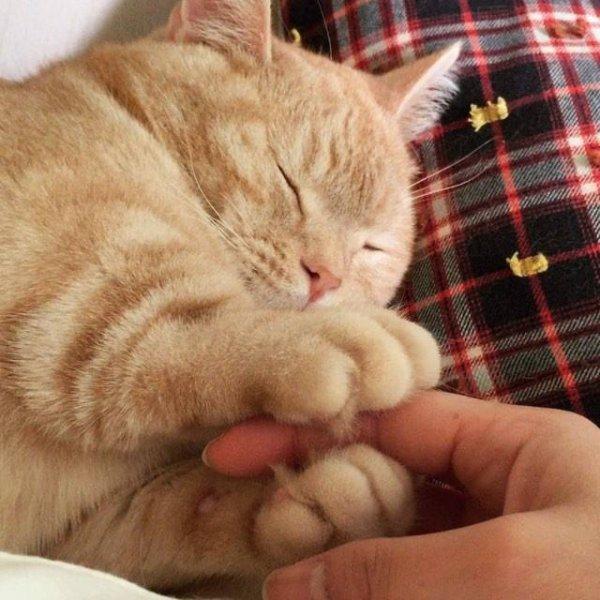 Gatinho segurando a mão de sua humana, olha só que encantador!!!