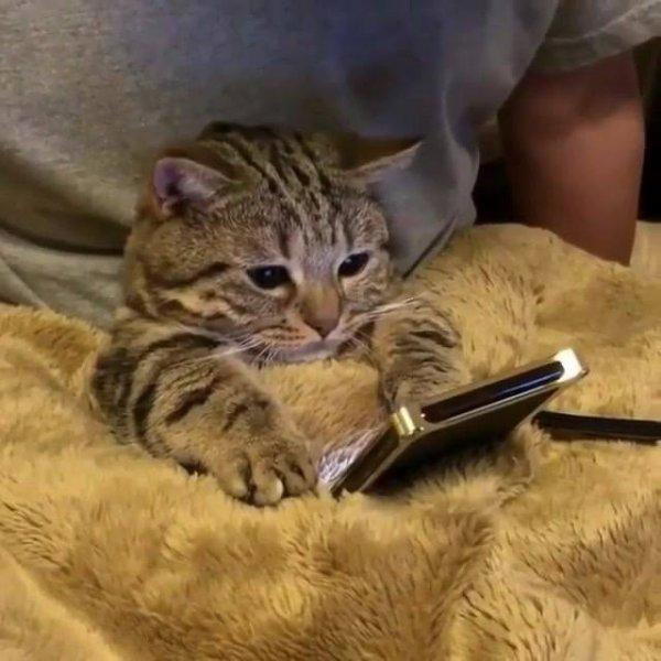 Gatinho vendo vídeo no celular, olha só a folga dele de baixo da coberta!!!