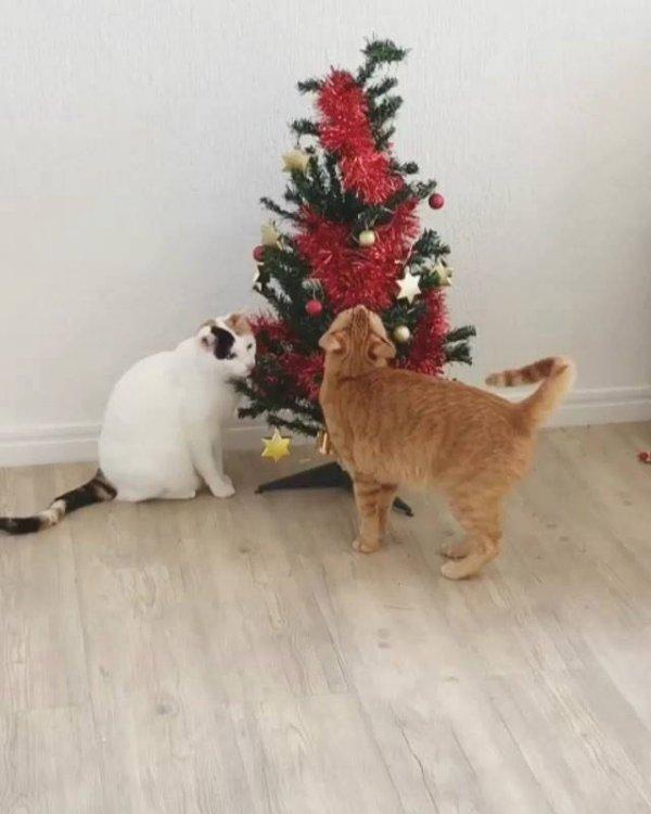 Gatinhos adoram arvores de natal, veja estes dois amiguinhos brincando!!!