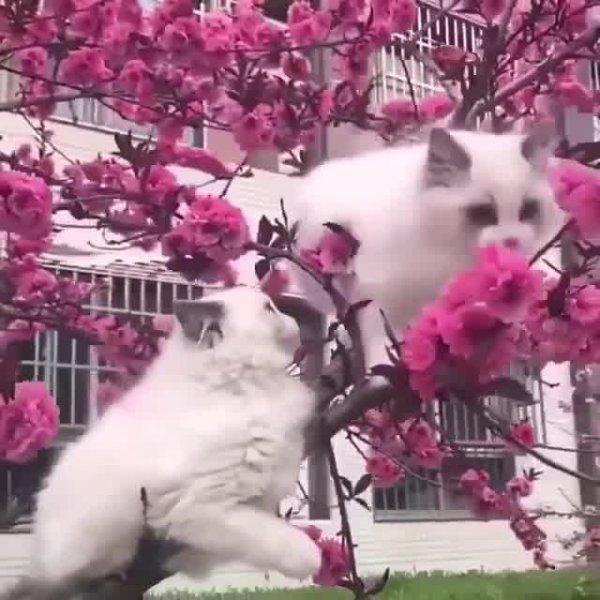 Gatinhos em uma arvore de flor, olha só que imagem mais linda!!!
