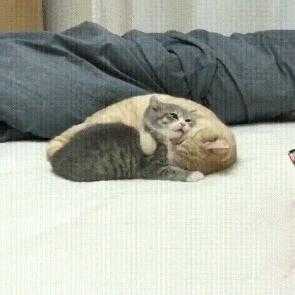Gatinhos fofinhos, como não amar estes animais tão lindinhos!!!