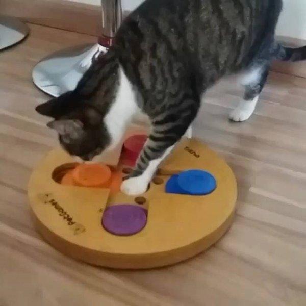 Gato brincando com joguinho que estimula atividade mental desses animais!!!