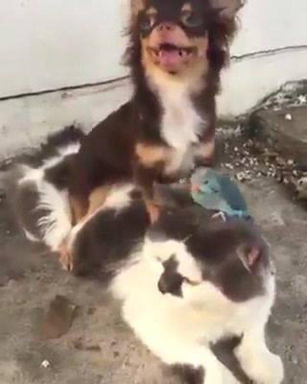 Gato, cachorro e passarinho, uma combinação perfeita, hahaha!!!