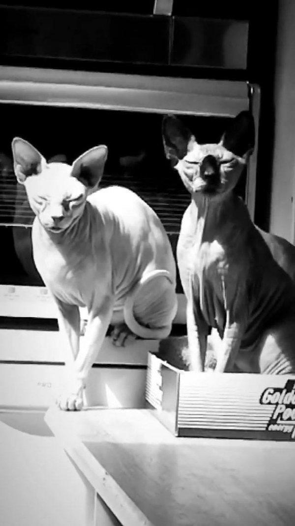 Gato com cara de mal, encontrar com ele anoite dá um medinho, hein!