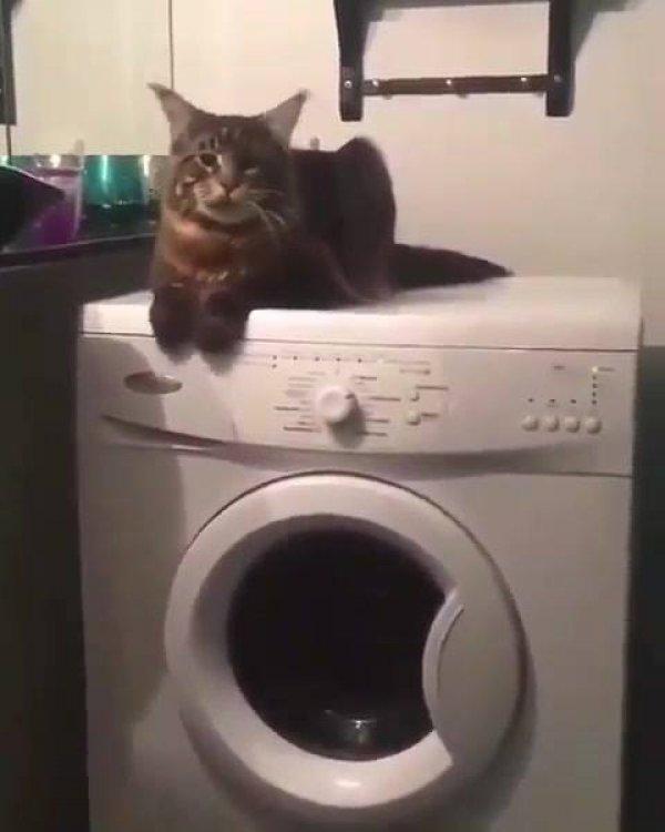 Gato deitado e vibrando com a máquina de lavar hahaha!