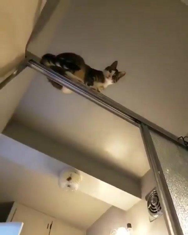 Gato deitado em cima do box do banheiro, só observando a folga da humana!