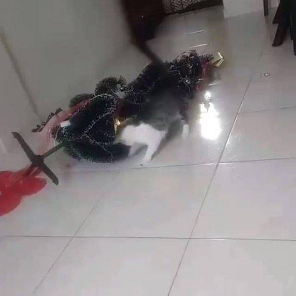 Gato derrubou arvore de natal e ainda continuou brincando com as bolinhas!!!
