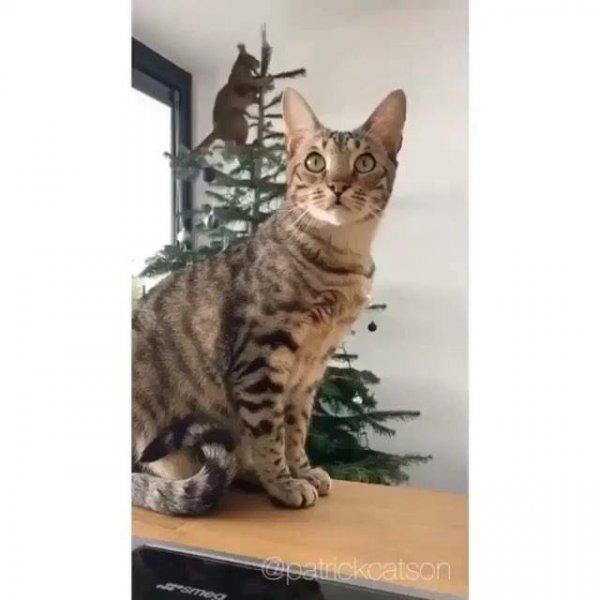 Gato no topo da árvore de Natal, o irmão fingiu nem estar vendo hahaha!