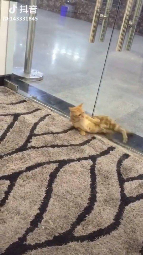Gato passa por debaixo da porta, eles são mesmo líquidos, incrível!