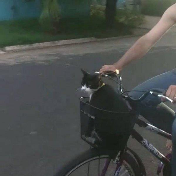Gato passeando com o papai de bicicleta, olha que tranquilidade!