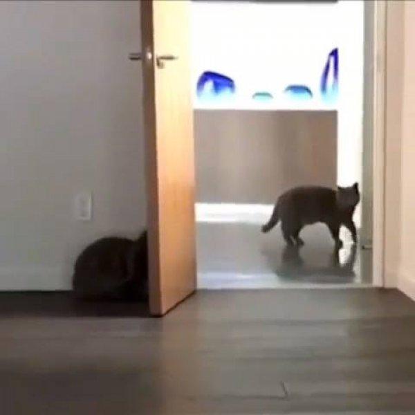 Gatos brincando de esconde-esconde, que diversão incrível!