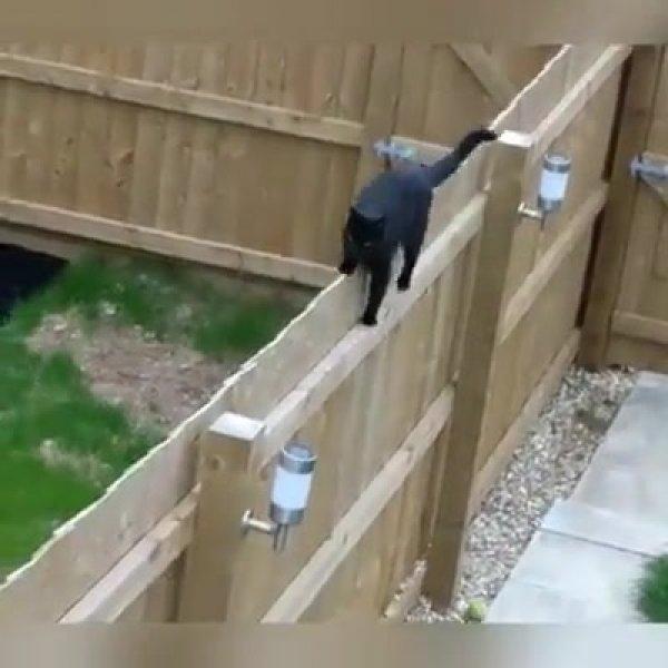 Gatos subindo paredes, escadas de uma forma que você nunca viu!!!!