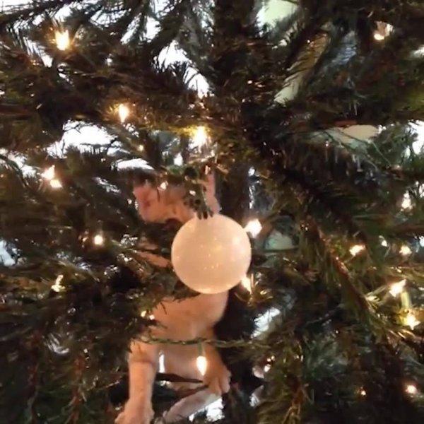 Gatos versus árvores de natal, eles são umas figuras e irão te fazer rir!
