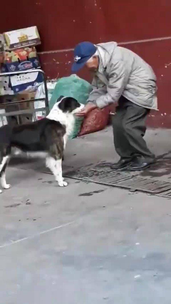 Homem levando água na mão para um cachorro de rua, linda atitude!