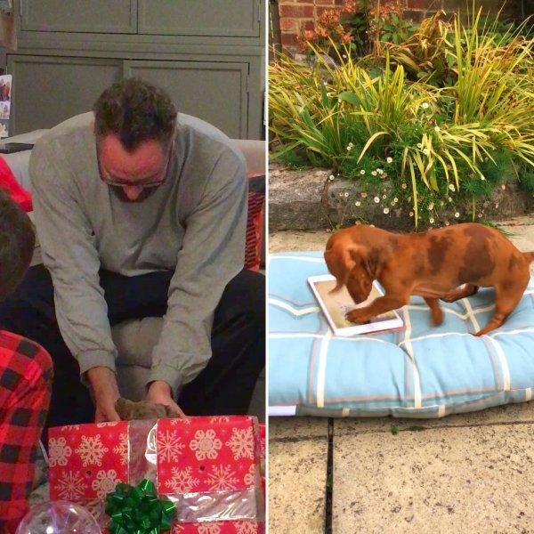 Homem se emociona ao ganhar um filhotinho de cachorro de presente de Natal