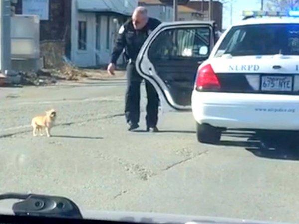 Humanos salvando animais de possíveis acidentes, vale a pena conferir!!!