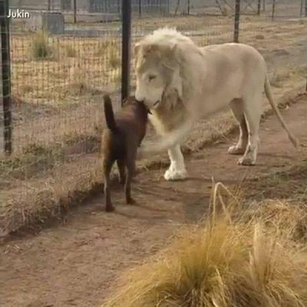 Imagens com animais que deixam a gente com um cisco no olho!