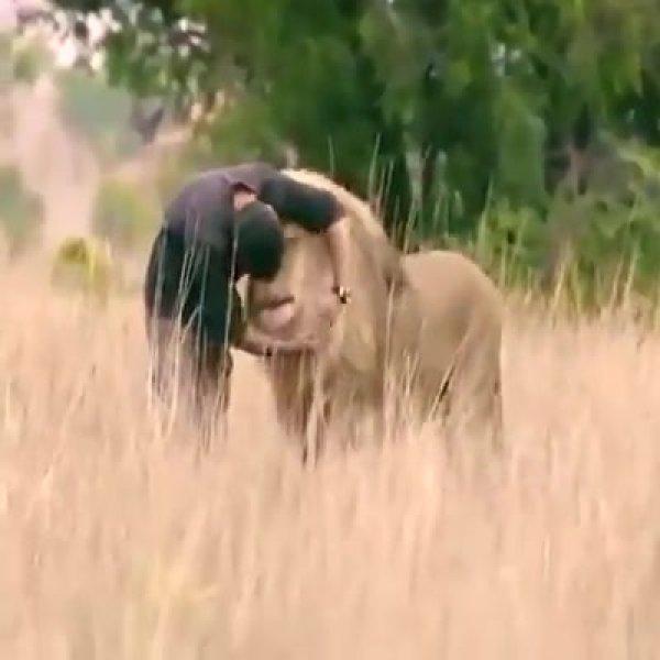 Imagens de amizade entre animais selvagens e humano, emocionante!