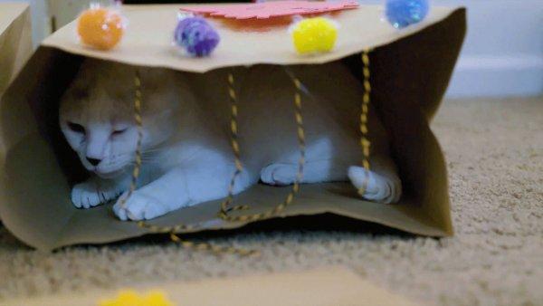 Imagens de animais que ganharam uma festa de aniversário!