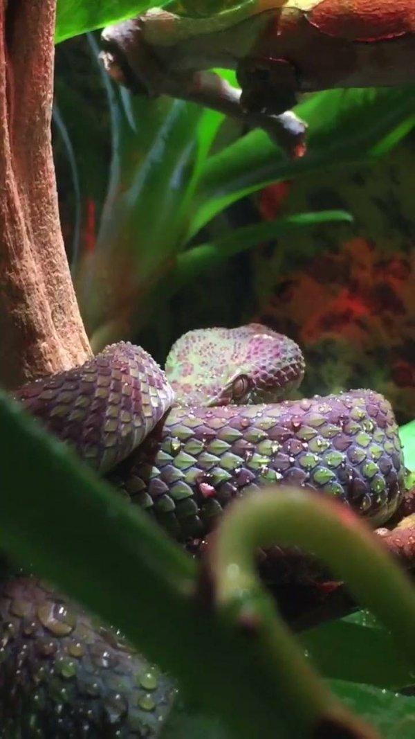 Imagens de uma cobra para postar no Facebook, marque a amiga!