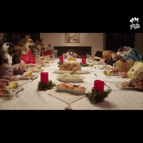 Jantar de natal dos Pets, que família mais linda, confira!