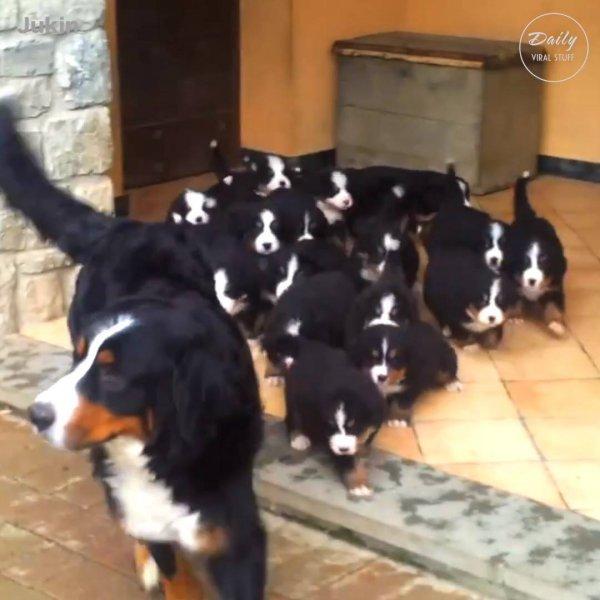 Mamães com seus filhotes, o vídeo mais fofinho que você vai ver hoje!!!