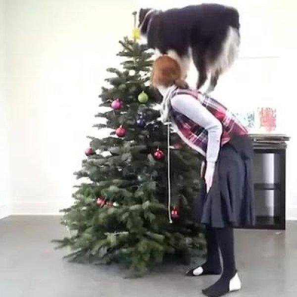 Montando a arvore de natal com melhor amigo, veja como este cãozinho ajuda!
