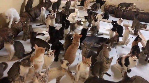 Muitos gatinho em uma sala, como são bem comportado olha só!!!