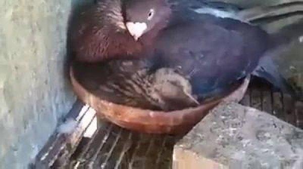 O amor entre os animais não existe distinção, apenas existe!