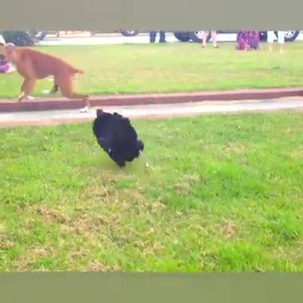 Os cães mais desajeitados e engraçados que você vai ver hoje!!!