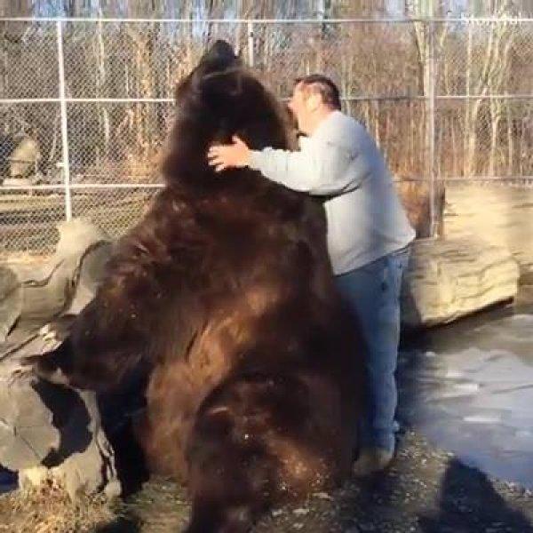 Os maiores e mais ferozes animais de estimações que já viu!
