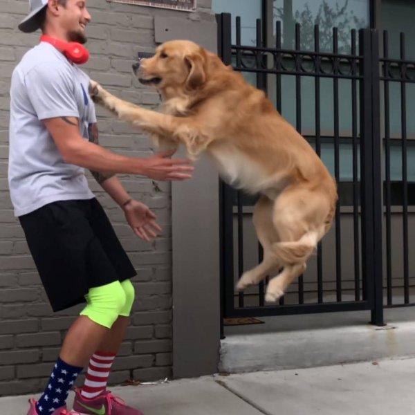 Os pulos de animais mais engraçados e divertidos da internet!