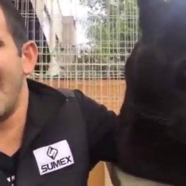 Pantera Negra com humano, veja quanto amor tem neste video!