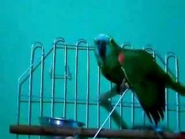 Papagaio chamando a mãe, igual quando criança esquece de levar a toalha!