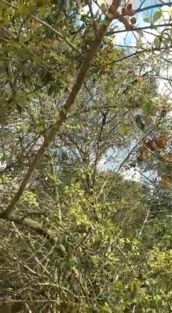Papagaio Louro em árvore, que ave mais encantadora, confira!