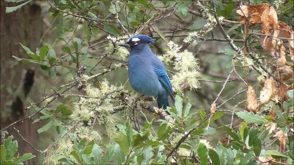Passarinho azul lindo, sentado em uma arvore, como a natureza é bela!!!