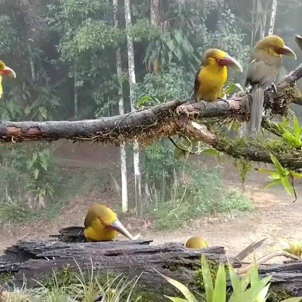 Pássaros para admirar, uma linda criação da natureza, confira!