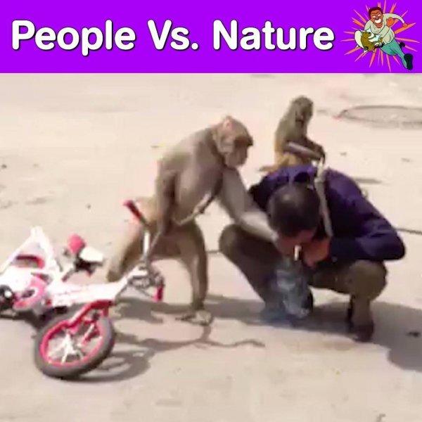 Pessoas em contados com os animais, um video muito engraçado!