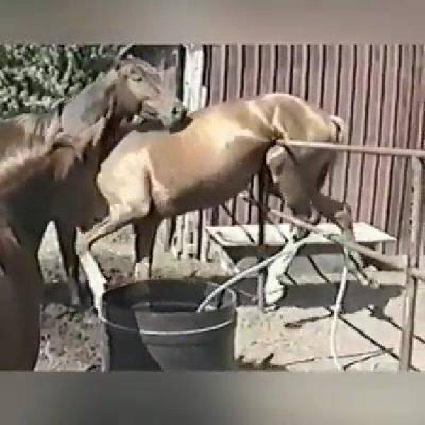 Pessoas salvando animais em apuros, é um vídeo mais emocionante que o outro!!!