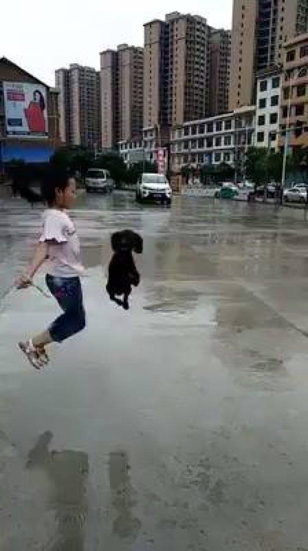 Poodle pulando corda com sua amiguinha, olha só como ele é espertinho!!!